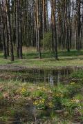 Zhytomyr Region photo ukraine